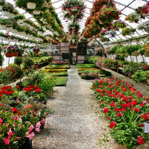 hanging baskets and containers